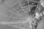 クモの糸繊維と宇宙エレベーター